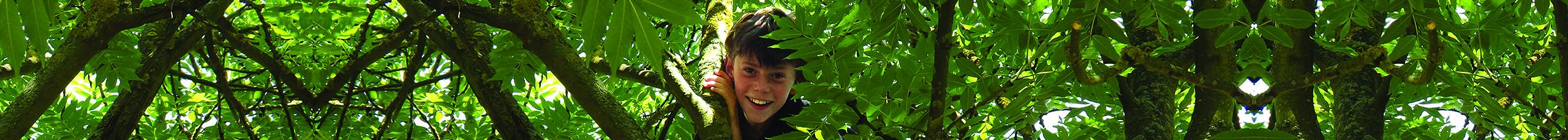 Kids climb trees